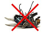 """Những cách tuyệt hay """"đánh bay"""" côn trùng khỏi ngôi nhà của bạn"""
