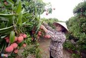 Máy bay chở 200 tấn vải thiều Việt bán qua Thái Lan
