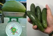 Kỳ lạ quả bơ Việt: To đùng như lợn con, nhỏ dị như ngón tay