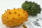 Xôn xao loại dưa chuột kì dị 400.000 đồng/quả ăn giải nhiệt mùa hè