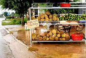 """Lâm Đồng: Hạt sầu riêng 90.000 đồng/kg vẫn """"sốt"""""""