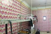 """Cả KTX nam chia nhau đi khắp Hà Nội tìm giấy dán tường... Hello Kitty và cái kết """"hết hồn"""""""