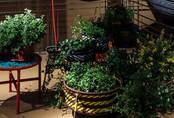 Thiết kế những chậu cây xanh trong nhà để không gian sống luôn tươi mới