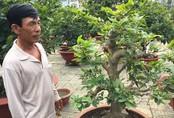 Chủ vườn Sài Gòn kể về thú chơi mai Tết của đại gia