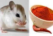Thứ bột vứt đi vừa rắc vào chuột đã sợ khiếp vía, 3 đời cũng không dám bén mảng