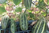 Sân thượng 40m² nhưng không khác gì một trang trại thu nhỏ của mẹ đảm ở Quảng Ninh