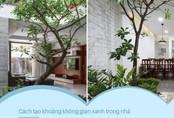 Dù nhà nhỏ tới đâu nếu áp dụng cách này sẽ luôn tạo được khoảng không gian xanh trong nhà