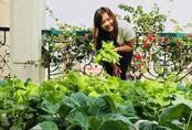Sân thượng đầy ắp rau quả sạch nhờ bàn tay chăm sóc đảm đang của cô giáo ở Hải Dương