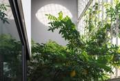 Nhà Hà Nội 'giấu' giàn cây xanh mát sau lớp mành sắt