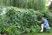 Tận dụng mảnh đất nhỏ sau nhà, người đàn ông đảm đang dù chân đi phải chống nạng vẫn trồng đủ loại rau quả sạch cho cả nhà thưởng thức