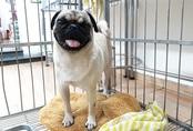 Dịch vụ chăm thú cưng kiếm tiền triệu dịp Tết