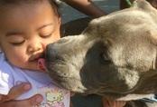 Mẹ chạy vào nhà thì thấy chó cưng đang gặm tã lôi con gái 7 tháng tuổi ra khỏi giường và dành cả đời mang ơn con vật vì hành động ấy