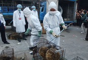 Ăn thịt thú hoang dã - thói quen nghìn năm làm hại người Trung Quốc