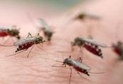 Mời cả đàn muỗi ra khỏi nhà chỉ với 1 quả chanh