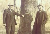 Chuyện về viên đạn kiên nhẫn ẩn thân 20 năm trong thân cây cuối cùng cũng giết được người cần giết và hoàn thành nhiệm vụ ngày xưa
