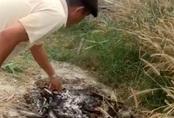 Các đoạn xương bị đốt ở Củ Chi là của phụ nữ khoảng 70 tuổi