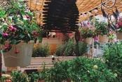 Ngôi nhà đẹp yên bình, lãng mạn nhờ người đàn ông đảm đang tự decor vườn và trồng đủ loại hồng ở Sài Gòn