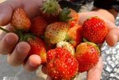 Bận rộn kinh doanh, mẹ Việt vẫn sưu tầm hạt giống để trồng cả khu vườn đủ loại hoa trái
