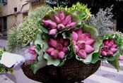 Chị bán hoa bật mí mẹo dễ nhất để phân biệt hoa sen và hoa quỳ tránh tiền mất mà rước cục tức vào người