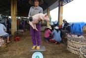 Bán heo theo cách kỳ lạ: Bồng heo đứng lên cân ở chợ chờ người đến mặc cả