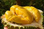 """Loại sầu riêng giá 1,6 triệu đồng/kg đang """"hút khách"""" rần rần là loại sầu riêng gì?"""