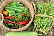 """""""Ăn không xuể"""" với khu vườn rau sạch """"trên mây"""" của mẹ đảm Sơn La"""