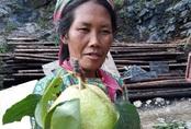 Đặc sản Hà Giang mát lịm, ngọt như đường đánh dạt hàng Trung Quốc