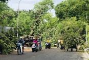 Chuyên viên phòng giáo dục ở Huế bị cây gãy đè tử vong