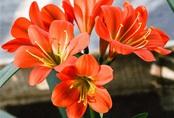 Trồng ngay loài hoa vừa sang trọng, yêu kiều vừa mang phong thủy tốt, rước quý nhân vào nhà bạn