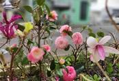 """Cô gái Việt ở Nhật hướng dẫn cách trồng cây, giâm cành kiểu """"con nhà nghèo"""" cho người thuê trọ hay ở nhà phố chật hẹp"""