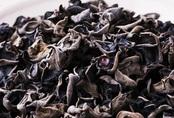 41 người Mỹ nhiễm khuẩn salmonella sau khi ăn nấm mèo khô
