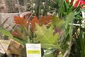 Siêu thị gây phẫn nộ vì bán nhánh lá cây mọc đầy ngoài đường giá 177 nghìn đồng