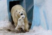 """24 khoảnh khắc ngọt ngào """"đốn tim"""" về tình mẫu tử của động vật hoang dã"""