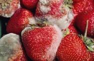 Cách khử trùng, bảo quản hoa quả không cần hóa chất