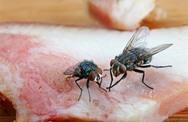 """Thấy ruồi đậu lên thức ăn đừng """"điên tiết"""" đập ngay mà bạn phải lập tức làm điều này"""