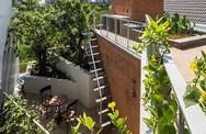 Nhà phố 3 tầng tuyệt đẹp với bể bơi và hàng chục khu vườn ở Sài Gòn