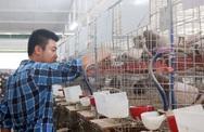Du học ở Úc 4 năm, chàng trai về nước nuôi chim