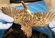 Bị bắt vì giấu 200 xác chim trong hành lý