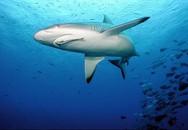 Vứt xác người tình xuống vùng biển đầy cá mập