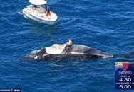 Kinh hãi người đàn ông leo lên con cá voi chết trương phềnh