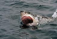 Xót thương chàng trai trẻ qua đời vì bị cá mập cắn vào đùi