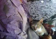 Mèo cắn rách 'của quý' khách nhậu