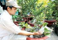 Khá lên nhờ nuôi trồng 'hàng độc': Đưa cây ăn trái vào chậu