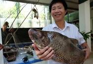 Cận cảnh loài cá có giá 1 chỉ vàng/1 kg tại Hà Nội