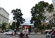 TPHCM đốn hàng trăm cây xanh cổ thụ