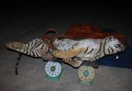 Kiểm tra xe tải, thấy nguyên một con hổ đã chết