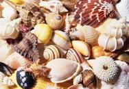 Bé gái 7 tuổi chết vì ăn ốc biển