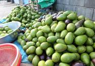Bơ sáp 20.000 đồng/kg bán tràn phố Sài Gòn