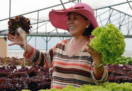 Trồng rau thủy canh lãi 5 tỷ đồng mỗi ha