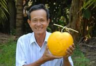 Theo 'vua' tạo hình dưa độc miền Tây ra vườn hái quả Tết